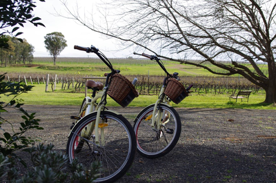 Experience the Vines by Electric Bikes Hunter Valley